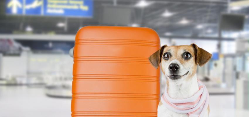 Viajar com animais: todas as dicas e regras a seguir