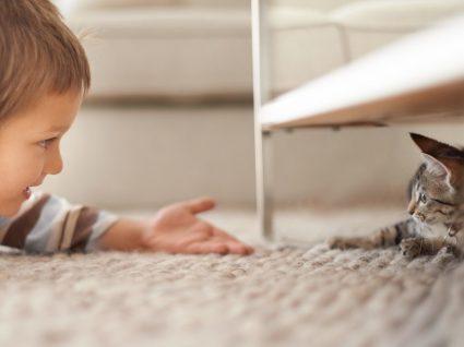 Alergia a gatos: causas, sintomas e como tratar
