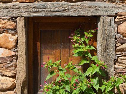 Sarzedas: roteiro por uma aldeia da charneca