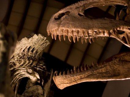 Museu da Lourinhã: programe uma visita ao Parque Jurássico português