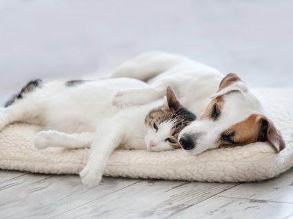 Cão e gato: é possível viverem juntos em harmonia?