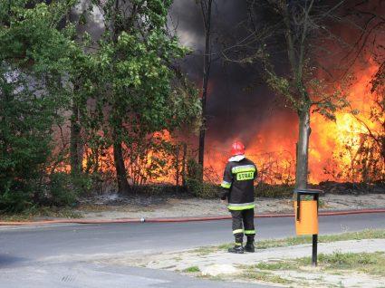 Condução em zonas de incêndio: cuidados a ter