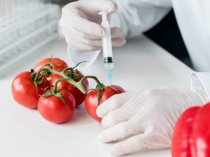Alimentos transgénicos: qual o seu impacto na saúde?