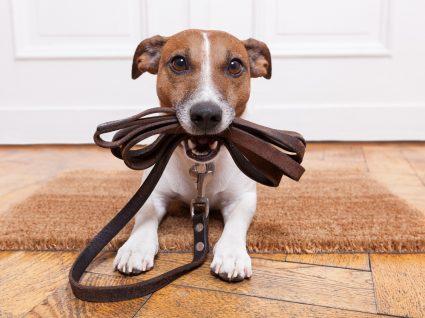 Sabe quantas vezes deve passear o seu cão?