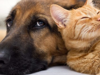 Pet sitter: encontre a solução ideal para o seu fiel amigo