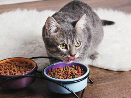 5 alimentos que os gatos não podem mesmo comer