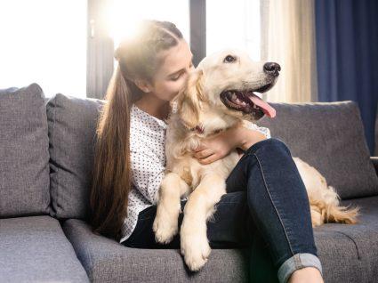 Dentes dos cães: tudo aquilo que precisa de saber