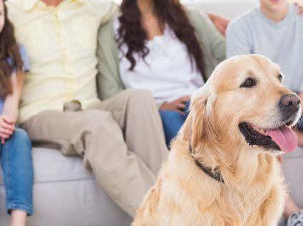 4 bons filmes para ver na Netflix na companhia do seu pet