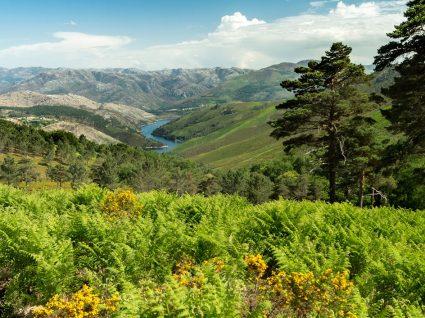 Portugal selvagem: 6 locais para descobrir a natureza profunda