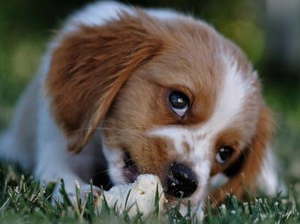 Bolos para cães: 5 receitas que os patudos vão adorar