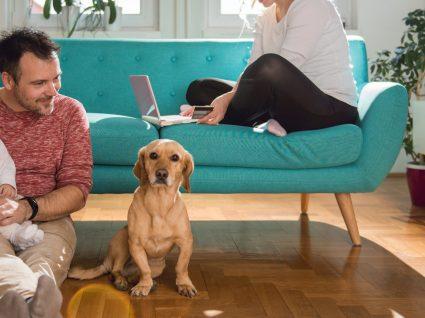 10 aspetos essenciais para preparar a casa para um cão