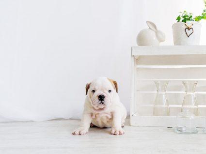 10 dicas de decoração para quem tem animais dentro de casa
