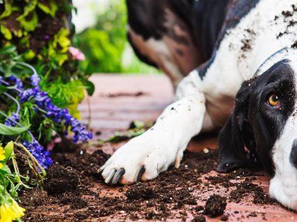 Conheça 5 plantas venenosas para animais