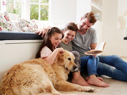 4 coisas que tem de saber antes de adotar um cão