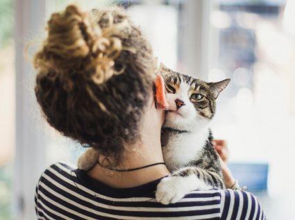 O que tem de saber antes de adotar um gato