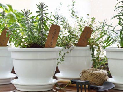 Como fazer canteiro de ervas aromáticas viçosas e saborosas
