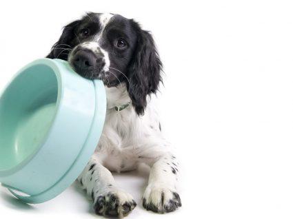 Receitas criativas para uma alimentação natural para cães equilibrada