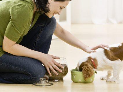 Comida para cão: dicas úteis e sugestões de produtos