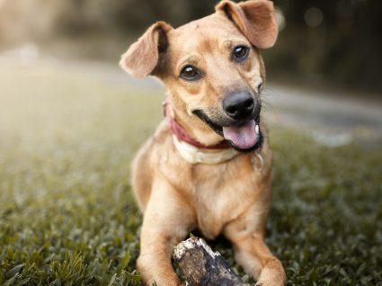 5 personalidades dos cães: como escolher o seu melhor amigo