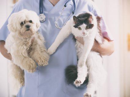 Esterilizar animais: sim ou não? Saiba tudo sobre o assunto