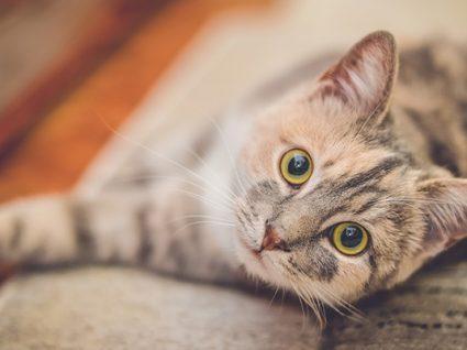 Gosta de abraçar gatos? Descobrimos o emprego ideal para si!
