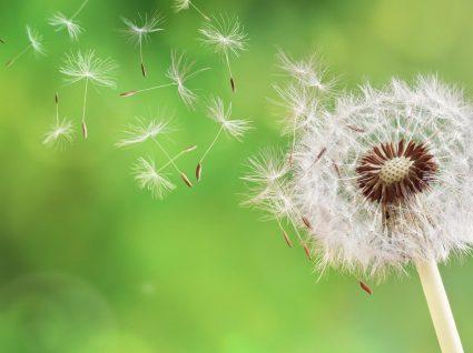 Alergia ao pólen: tudo o que precisa de saber