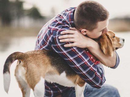 Sabia que os animais ajudam a reduzir os níveis de stress?
