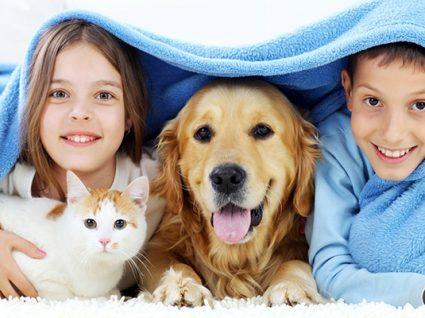 Animais de estimação: novo estatuto jurídico e novas regras