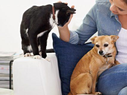 7 coisas que tem em casa que podem prejudicar a saúde dos seus animais