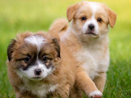 Anúncio e venda de animais pela Internet com novas regras