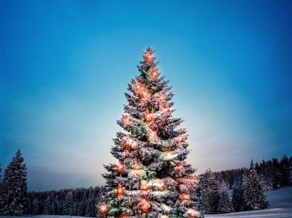 As 6 árvores de Natal mais bonitas do mundo