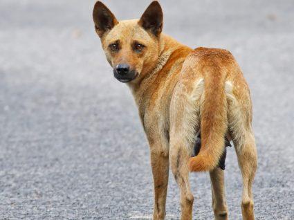 Saiba o que fazer quando encontra um animal ferido ou perdido