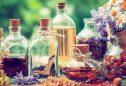 5 plantas medicinais muito versáteis