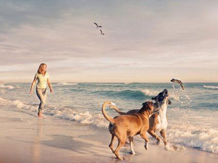 Levar o cão para a praia: regras e cuidados a ter