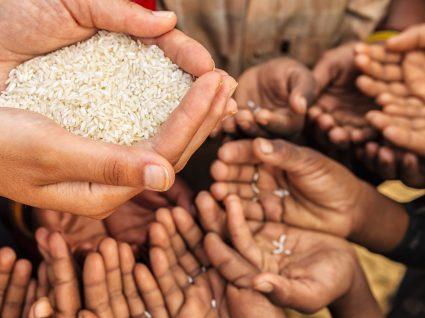 ONU: Capacidade de humanidade se alimentar no futuro está em risco