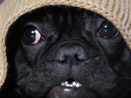 Cães e trovoada: porque têm uma relação complicada