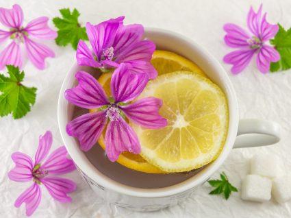 5 benefícios do chá de malva