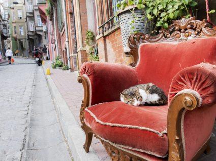 Conheça a cidade que mais adora gatos