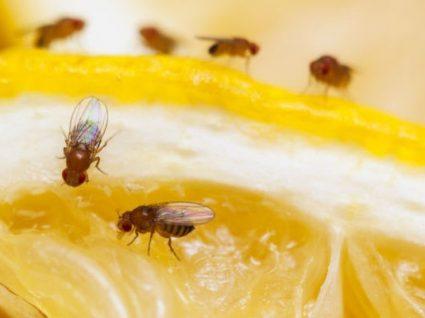 Descubra como afastar formigas e moscas da cozinha para sempre