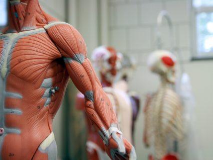 7 curiosidades do corpo humano