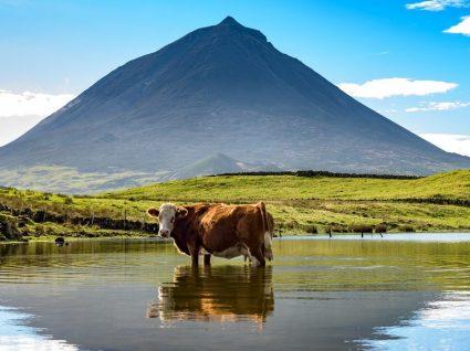 9 razões para ir aos Açores pelo menos uma vez na vida