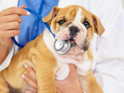 23 segredos que os veterinários não contam
