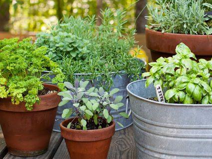 6 ideias fantásticas e baratas para a decoração do jardim