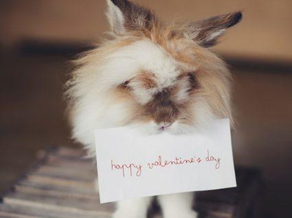 Valentine's day: expressões de amor em inglês