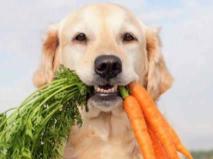 10 alimentos nossos que os cães podem comer