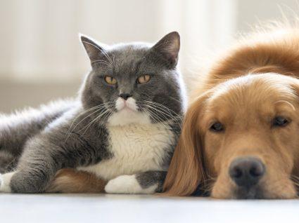 Descubra quantos animais pode ter em casa