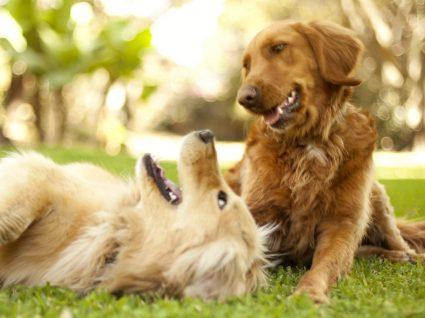 50 curiosidades sobre cães: deixe-se surpreender
