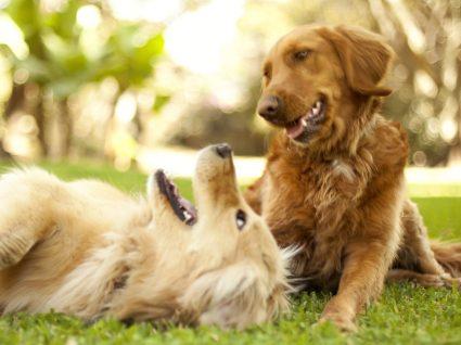 Gaia recebe primeiro festival para cães em Portugal