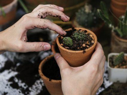 6 ideias baratas para fazer um jardim único e de fácil manutenção