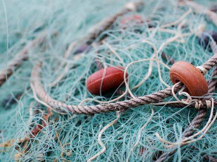 Direção Regional de Agricultura e Pescas do Norte quer 37 licenciados